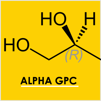 Alpha-GPC is a crucial component for the brain and a popular nootropic supplement
